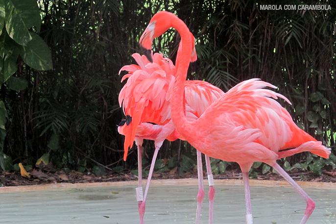 Flamingos no Xcaret