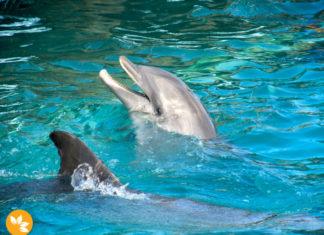 Nadar com golfinhos em Cancún – Dolphin Discovery