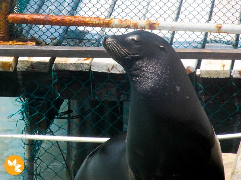 Animais no Dolphin Discovery em Cancún