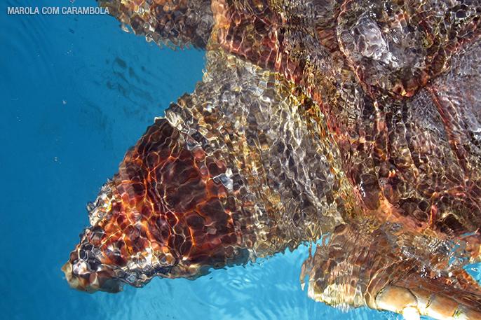 Diversas espécies de tartarugas