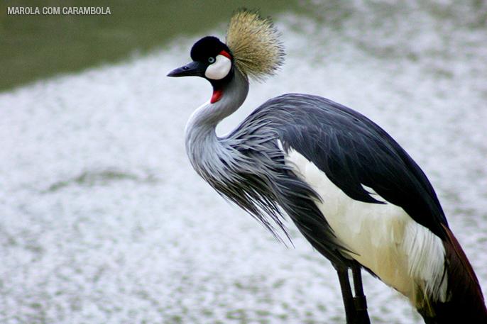 Aves Exóticas no Zoológico