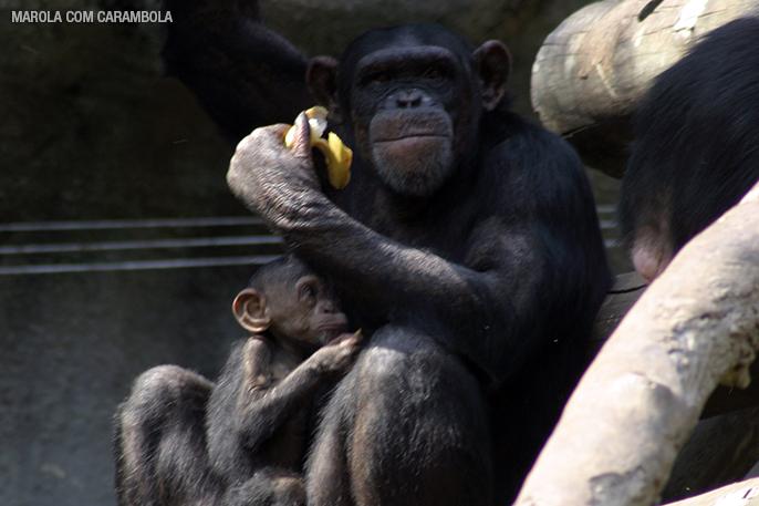 Macacos no Zoológico