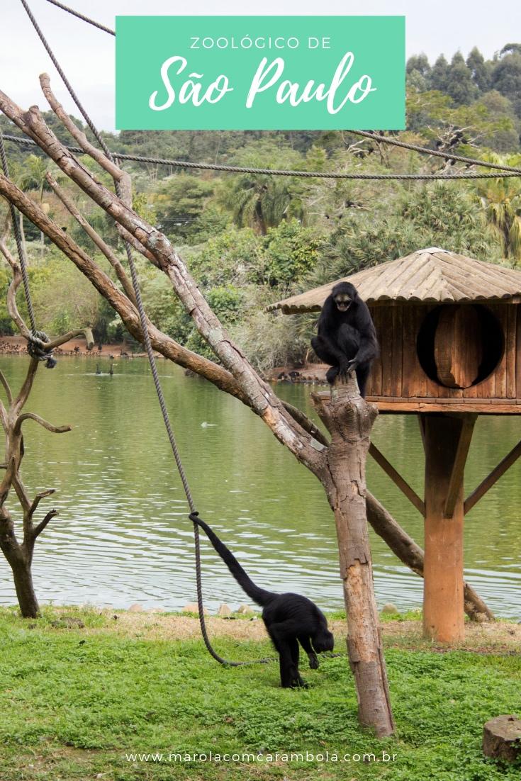 O Zoológico de São Paulo é considerado o maior do Brasil. Se você está na cidade ou programando sua viagem para cá, não deixe de incluir no seu roteiro.