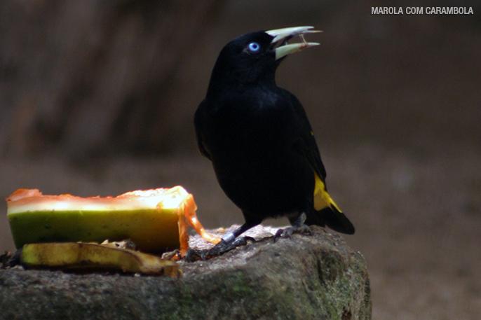 Aves no maior zoológico particular do Brasil