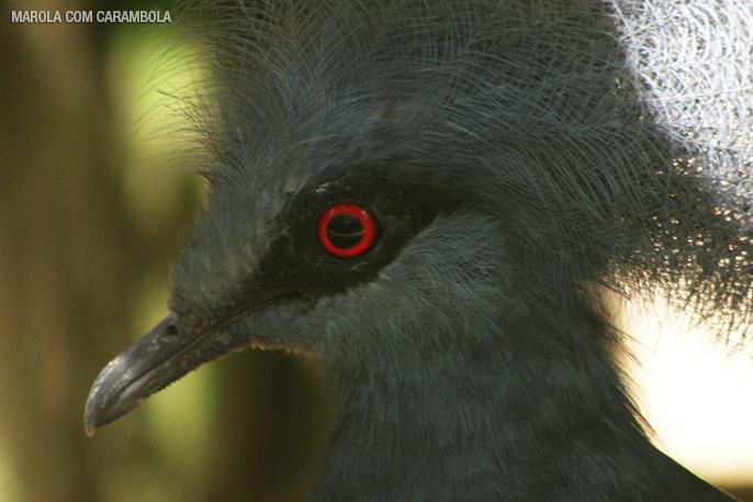 Aves no Zooparque Itatiba