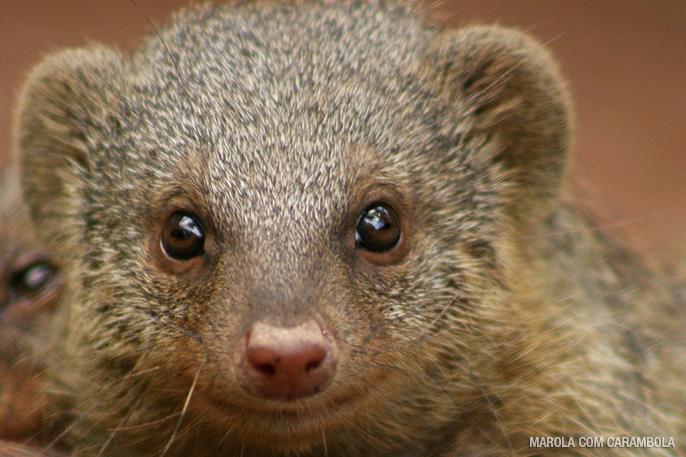 Zooparque Itatiba – o maior zoológico particular do Brasil