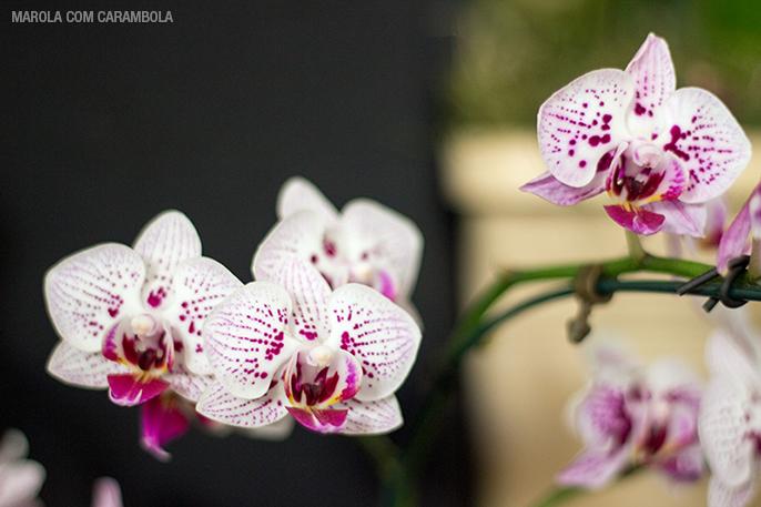 Orquídeas em exposição