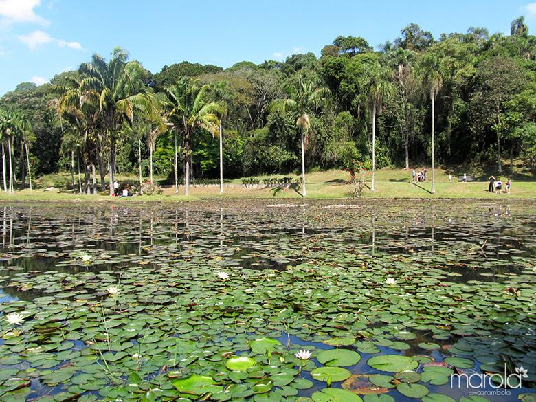 Jardim Botânico - SP - PICNIC