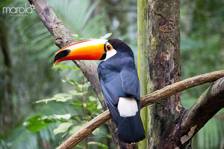 Parque das Aves - Viagem para Foz do Iguaçu