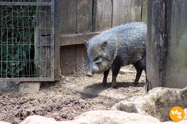 Visita ao Zoológico de Gramado