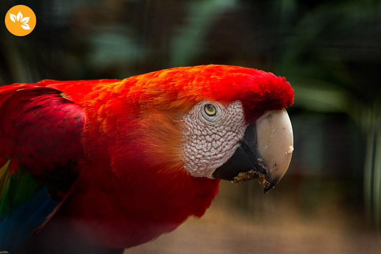 Parque das Aves em Foz do Iguaçu - Araras