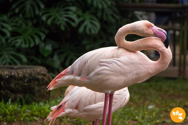 Parque das Aves em Foz do Iguaçu - Flamingo