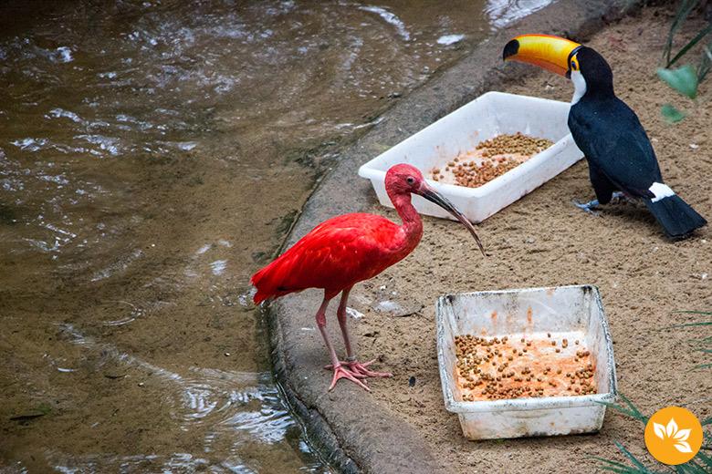 Parque das Aves em Foz do Iguaçu - Tucano