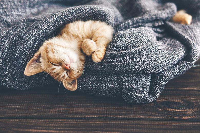 Vou viajar! E agora, cat sitter ou pet hotel? © shutterstock