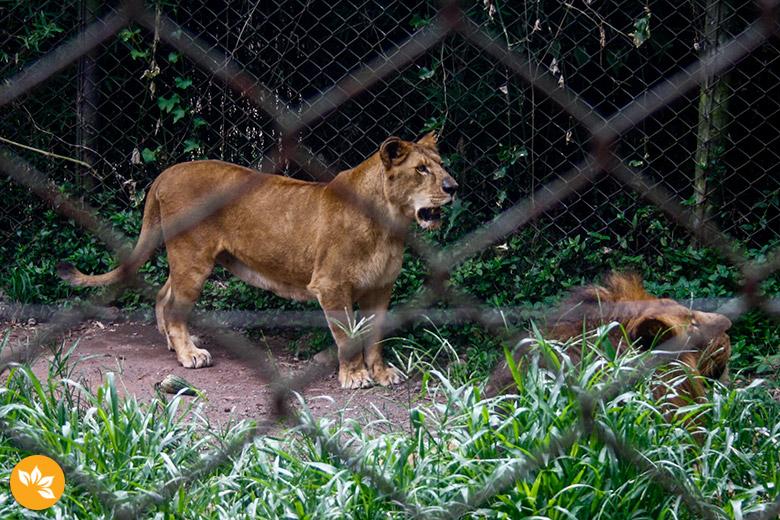 Zoo Safári em São Paulo