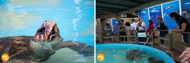 Turismo de Experiência - Projeto Tamar