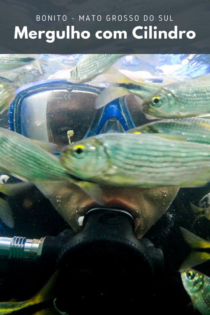 O Mergulho com Cilindro em Bonito você pode fazer na Lagoa Misteriosa, no Abismo Anhumas, no Rio da Prata, no Rio Formoso e na Nascente Azul.