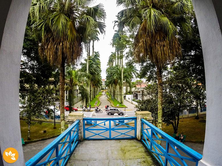 O que fazer em Joinville - Rua das Palmeiras