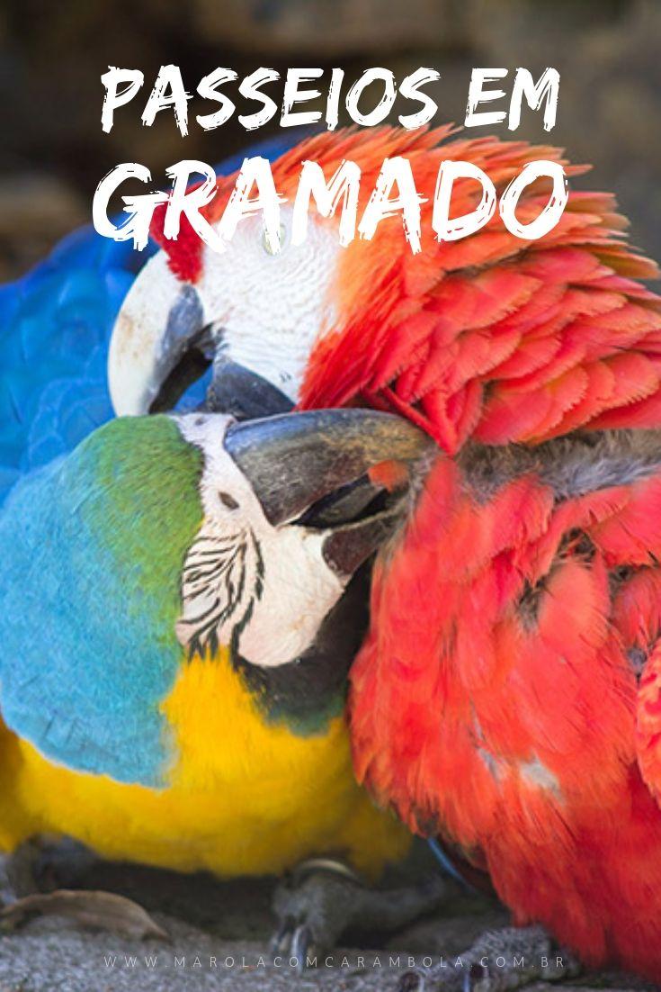Passeios em Gramado - Seleção dos melhores atrativos para você conhecer na cidade: Mini Mundo, Zoológico, Fábrica de Chocolate, Centro da Cidade, e mais.
