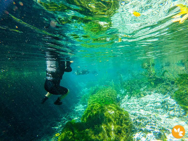 Rio Sucuri - Vegetação Aquática