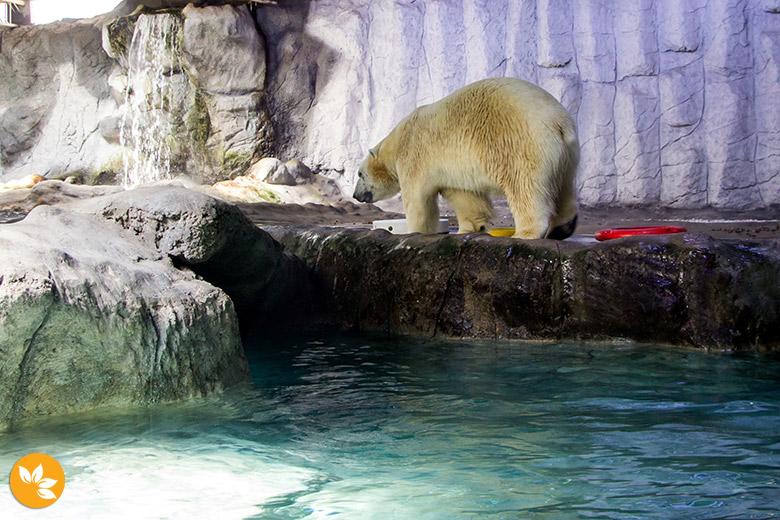 Aquário de São Paulo - Ursos