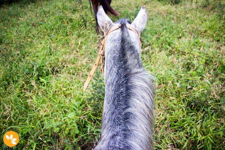 Passeio a Cavalo na Estância Mimosa