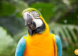 Maior viveiro de Araras da América do Sul
