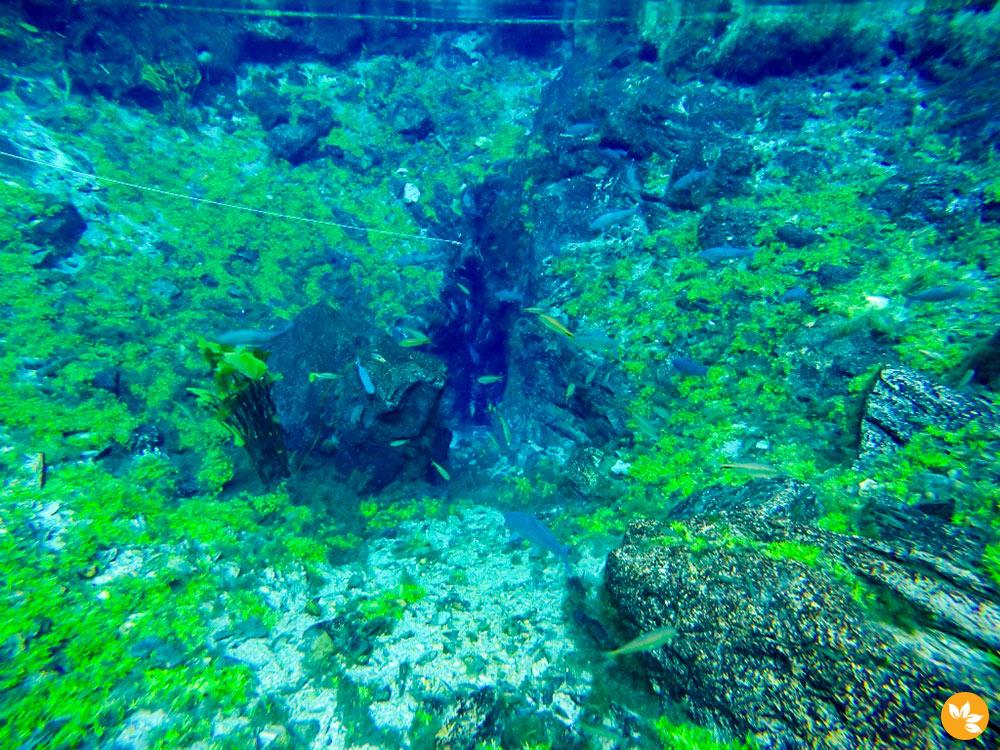 Bonito - Flutuação na Nascente Azul - Mergulho Livre Nascente