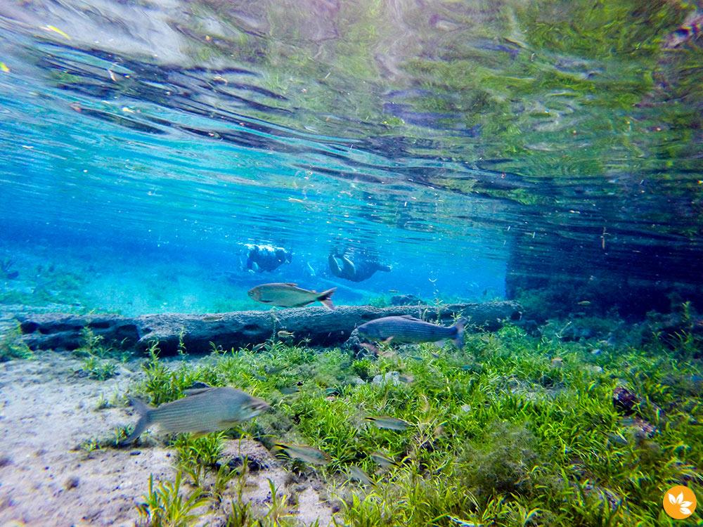 Bonito - Flutuação na Nascente Azul - Peixes