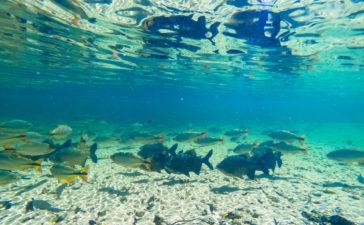 Piscina de água natural cheia de peixes no Balneário Estivado