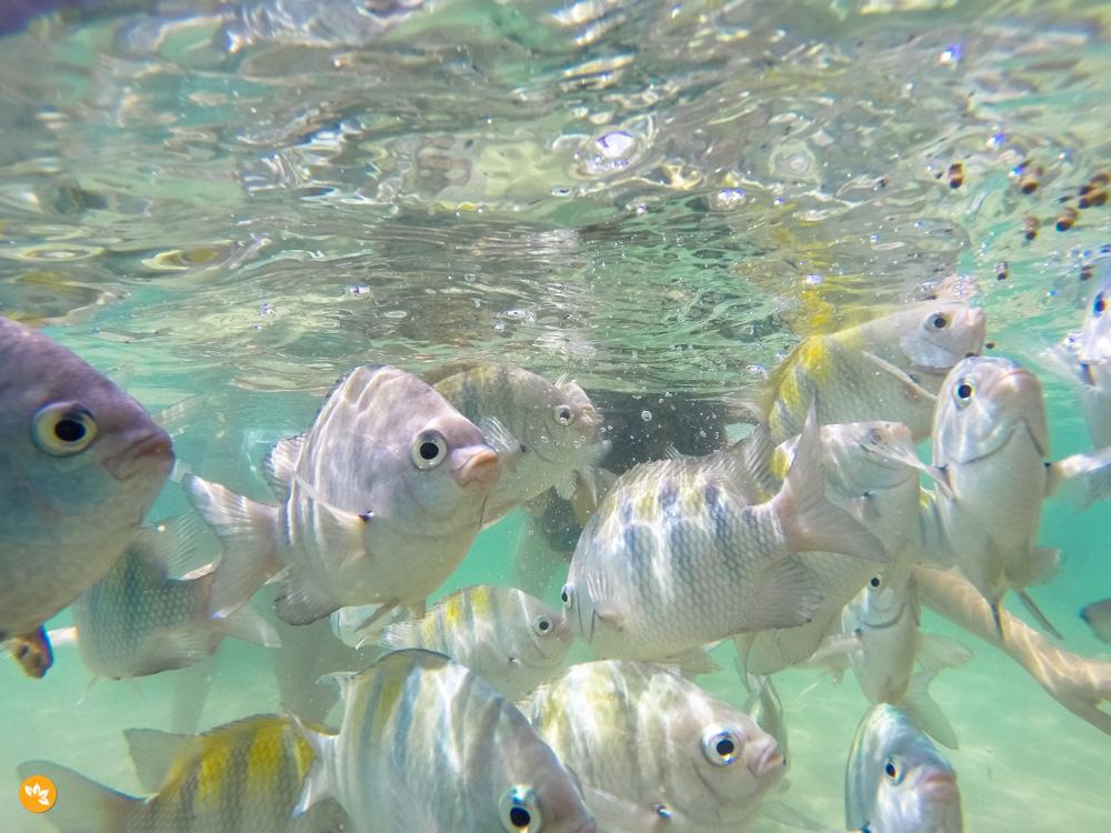 Peixes nas Piscinas Naturais em Porto de Galinhas