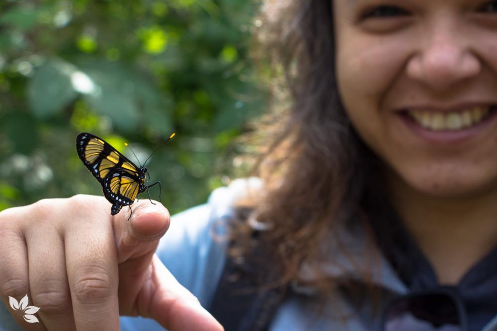 O que fazer em Campos do Jordão - Borboletário Flores que Voam