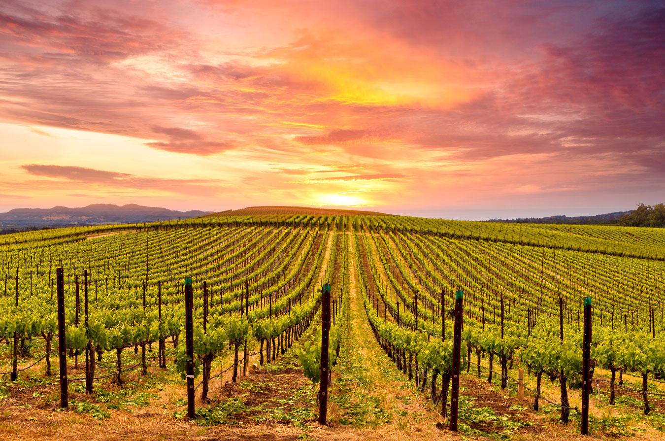 Condado de Sonoma, nos Estados Unidos, é o epicentro dos melhores vinhos do país norte-americano